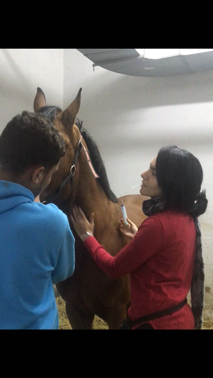 Horse Times Egypt: Equestrian Magazine :Riders Blog :WHEN EQUICARE'S BEETHOVEN WASN'T FEELING WELL