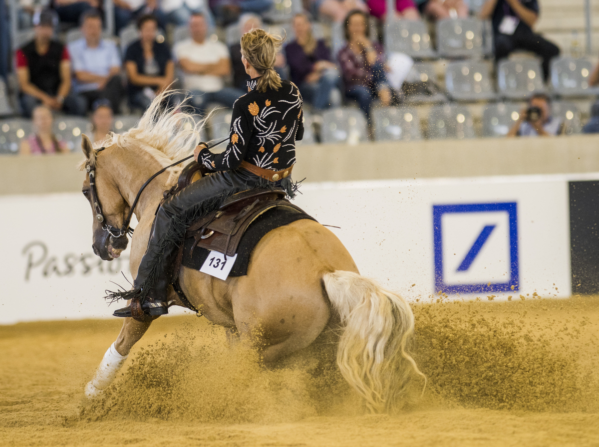 Horse Times Egypt: Equestrian Magazine :News :REINING RESULTS - FINAL TEAM STANDINGS AND 1ST QUALIFYING INDIVIDUAL COMPETITION