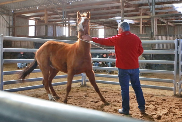 Horse Times Egypt: Equestrian Magazine :News :There are no magic fixes for horse problems