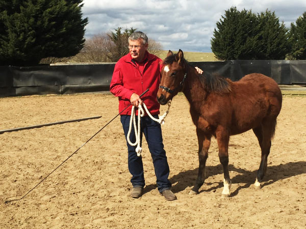 Horse Times Egypt: Equestrian Magazine :News :Young horse training: Get it right from the get-go