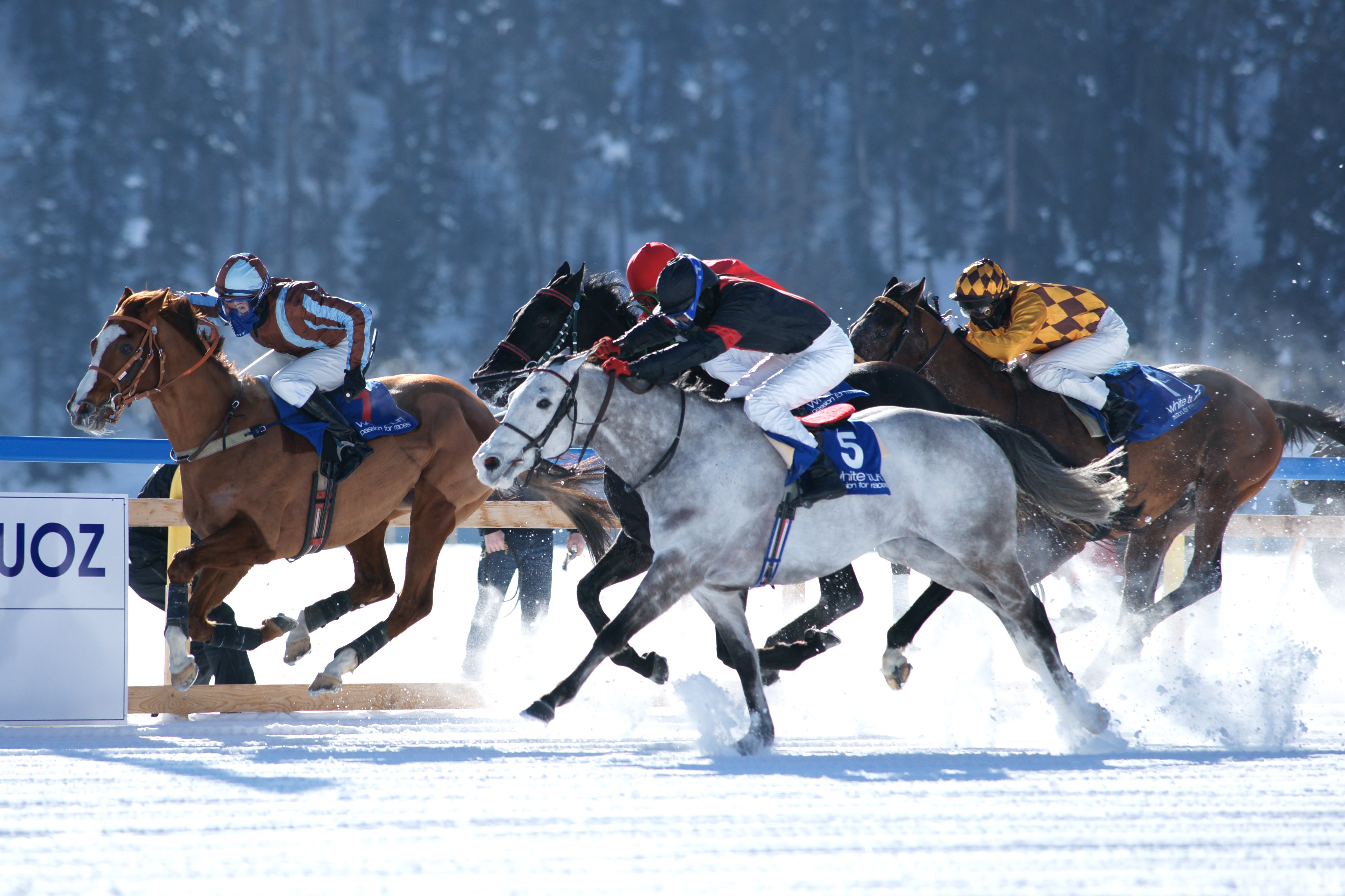 RISK FACTORS FOR INJURY IN SWISS HORSE RACING ::