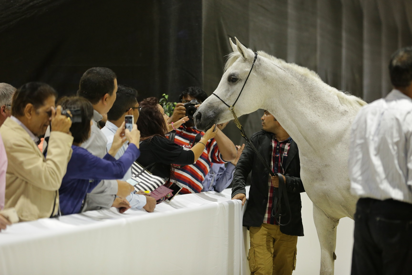 Horse Times Egypt: Equestrian Magazine :News :ASSORTMENT OF HORSE BREEDS AND PERFORMANCES DAZZLE CROWDS AT 12TH DUBAI INTERNATIONAL HORSE FAIR