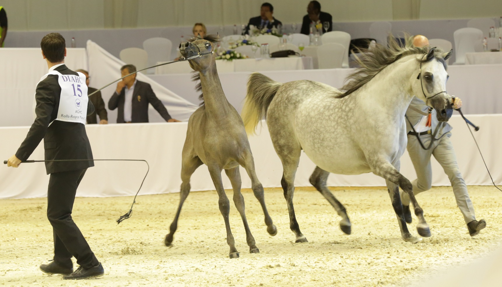 Horse Times Egypt: Equestrian Magazine :News :THE EQUESTRIAN WORLD RACES TO DUBAI WORLD TRADE CENTER THIS MARCH